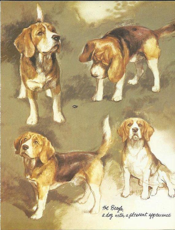 Beagle By Rien Poortvliet 1983 Colour Dog Hound Print Dog Vintage