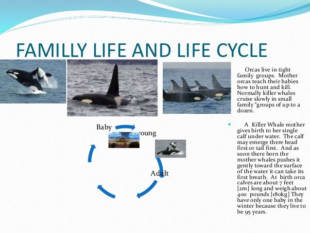 Life Cycles Of Whales
