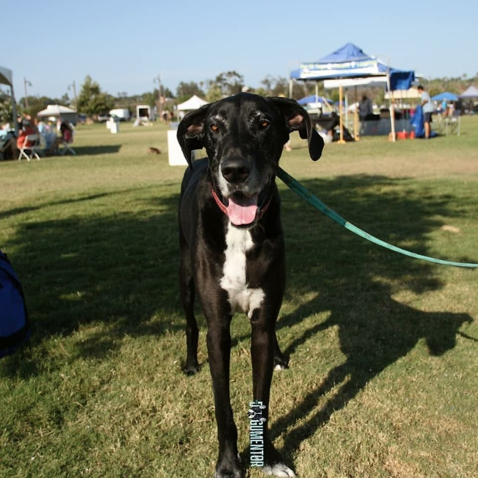 Pin On Dogs Of San Diego