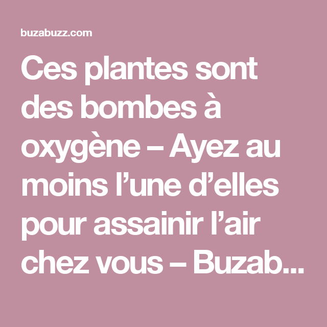 Ces plantes sont des bombes à oxygène – Ayez au moins l'une d'elles pour assainir l'air chez vous – Buzabuzz