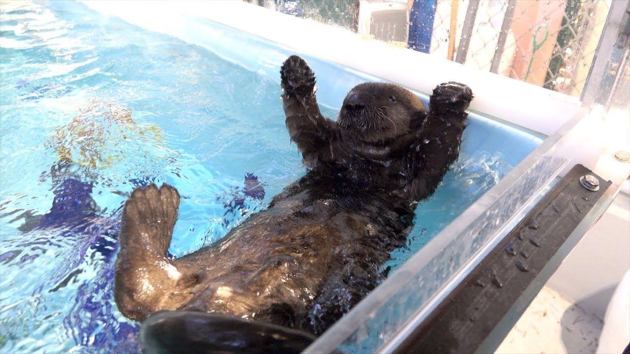 Orphaned sea otter pup arrives at the Oregon Zoo | Sea ...