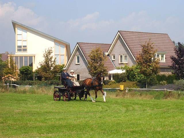 Tobias (Lorton x Jilady v. Eusebio) tijdens de Dag van het Gelders Paard in Hengelo Gld.
