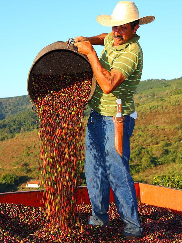 Here's where your morning cup of coffee begins. Farmer Noel da Silva unloads freshly-harvested coffee cherries at Fazenda Recanto, a Rainforest Alliance Certified farm in Brazil.