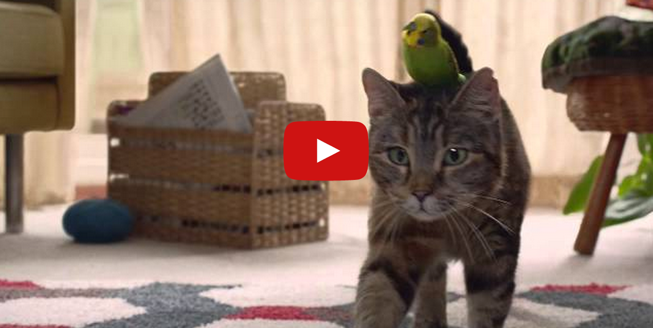 Cat And Budgie Sing A Love Duet In 2020 Cats Budgies Cats And Kittens