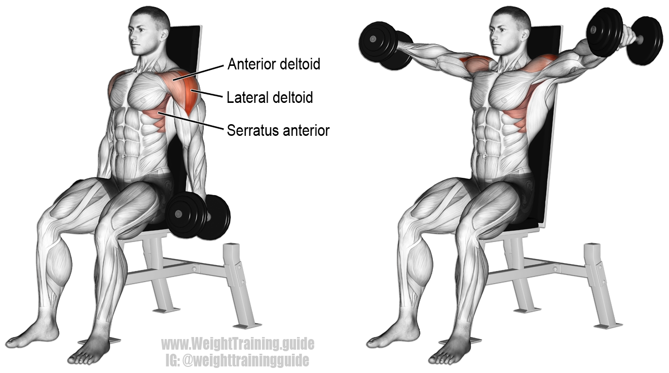 Seated dumbbell lateral raise instructions and video | Lateral ...