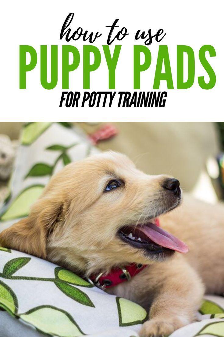 fe15c0b63daf1d400562a294d51ba0c9 - How To Get My Puppy To Use Puppy Pads