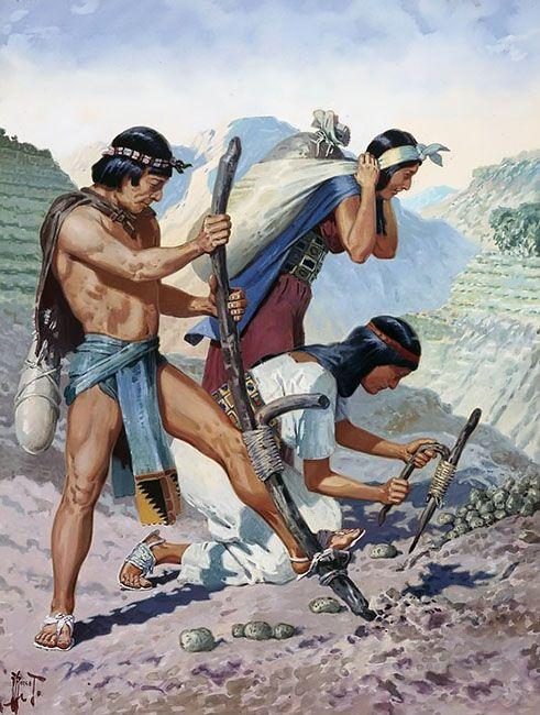 fe15cb0a20498d6135892d15ec964656 - Inca Terrace Farming And Aztec Floating Gardens
