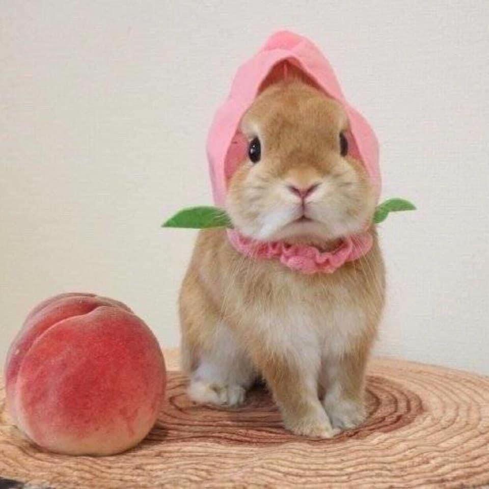 Pets おしゃれまとめの人気アイデア Pinterest Một Chiếc Thỏ Xinh ʕ ᴥ ʔ うさぎ 雛祭り