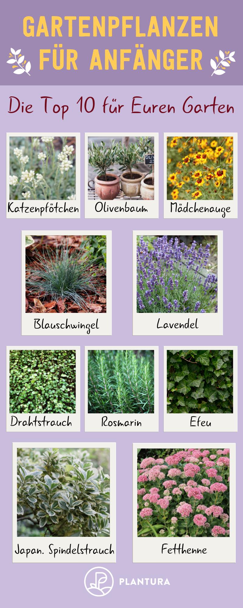 Photo of 10 Gartenpflanzen für Anfänger – Plantura