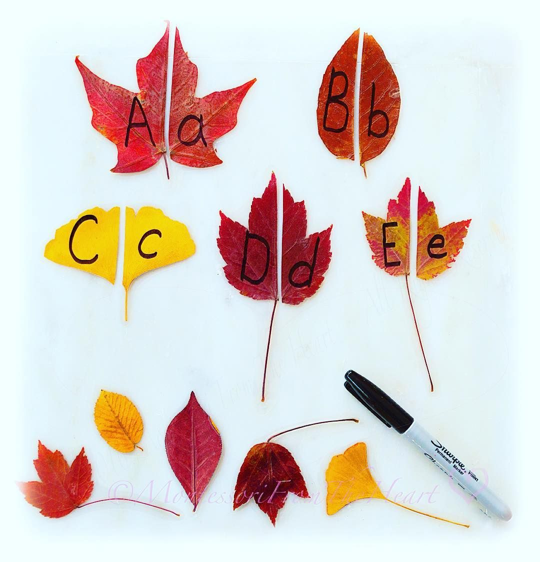Leaf Letter Matching Gloucestershire Resource Centre