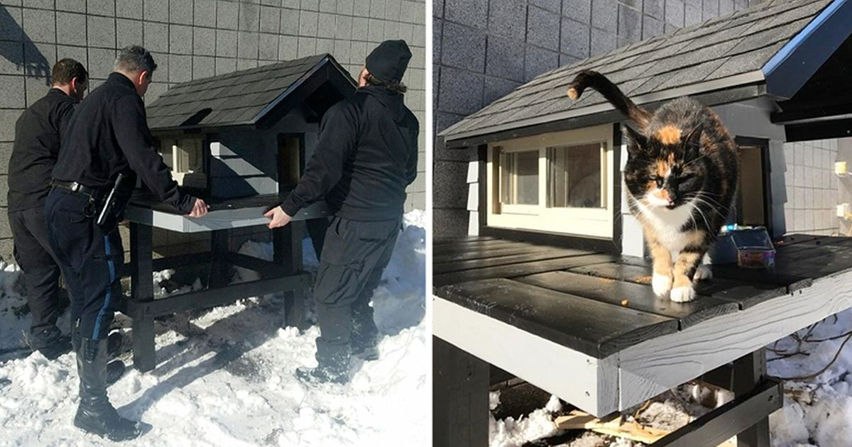 Poliisit huomasivat kulkukissan − he rakensivat sille talon