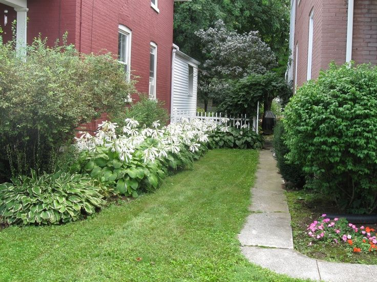 Side Yard Landscaping Ideas Pictures With White Spirea And Hosta Garden