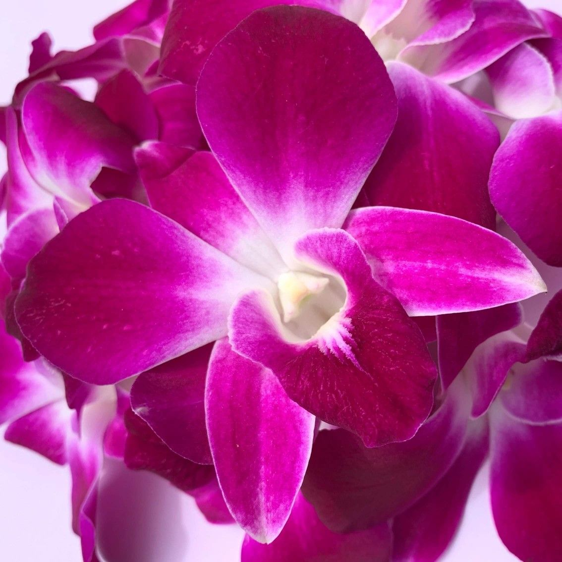 The Perfect Edible Garnish Orchids Orchid Flower Drink Garnishing