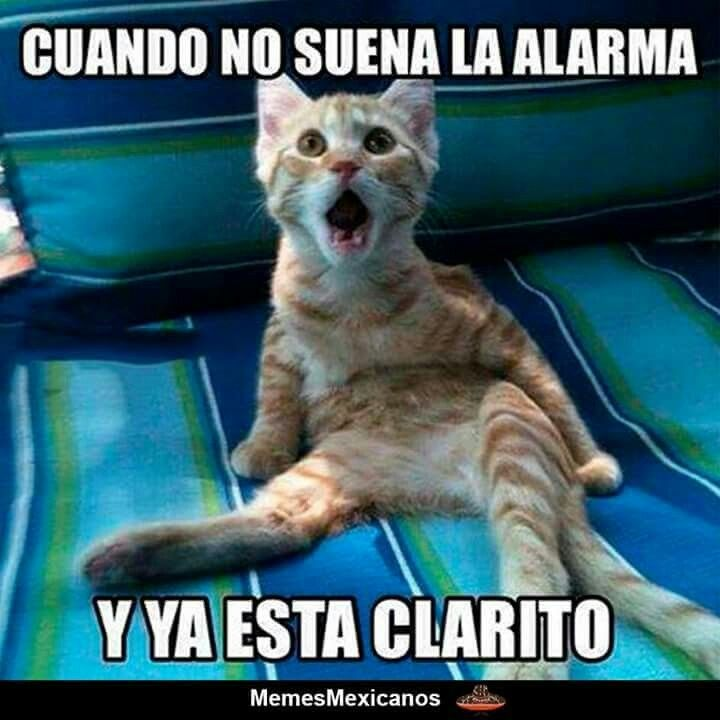 Gatito Asustado Funny Animal Jokes Funny Animals Funny Cats