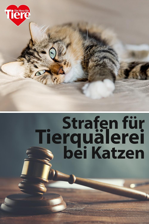 Tierquälerei bei Katzen: Diese Strafen drohen - sind sie