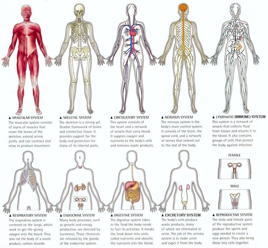 Pin By Tommy Clark On Science Body Systems Pinterest Body