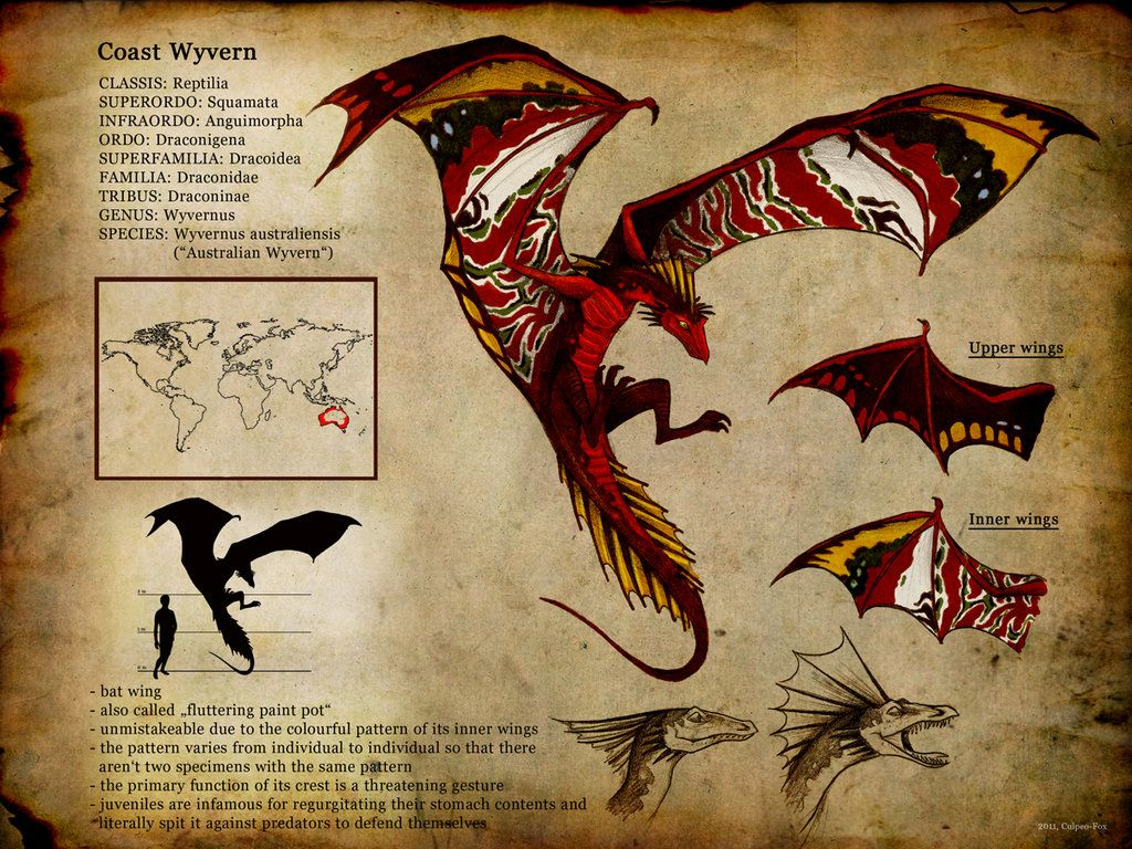 "Dragon ID card / Drago, carta d'identità - ""Wyvernus australiensis"", Art by Culpeo-Fox on deviantART"