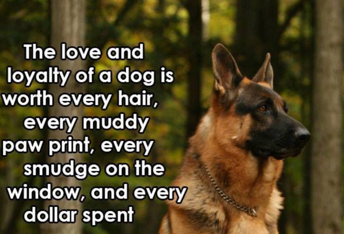 The Love And Loyalty Of A Dog German Shepherd Quotes German