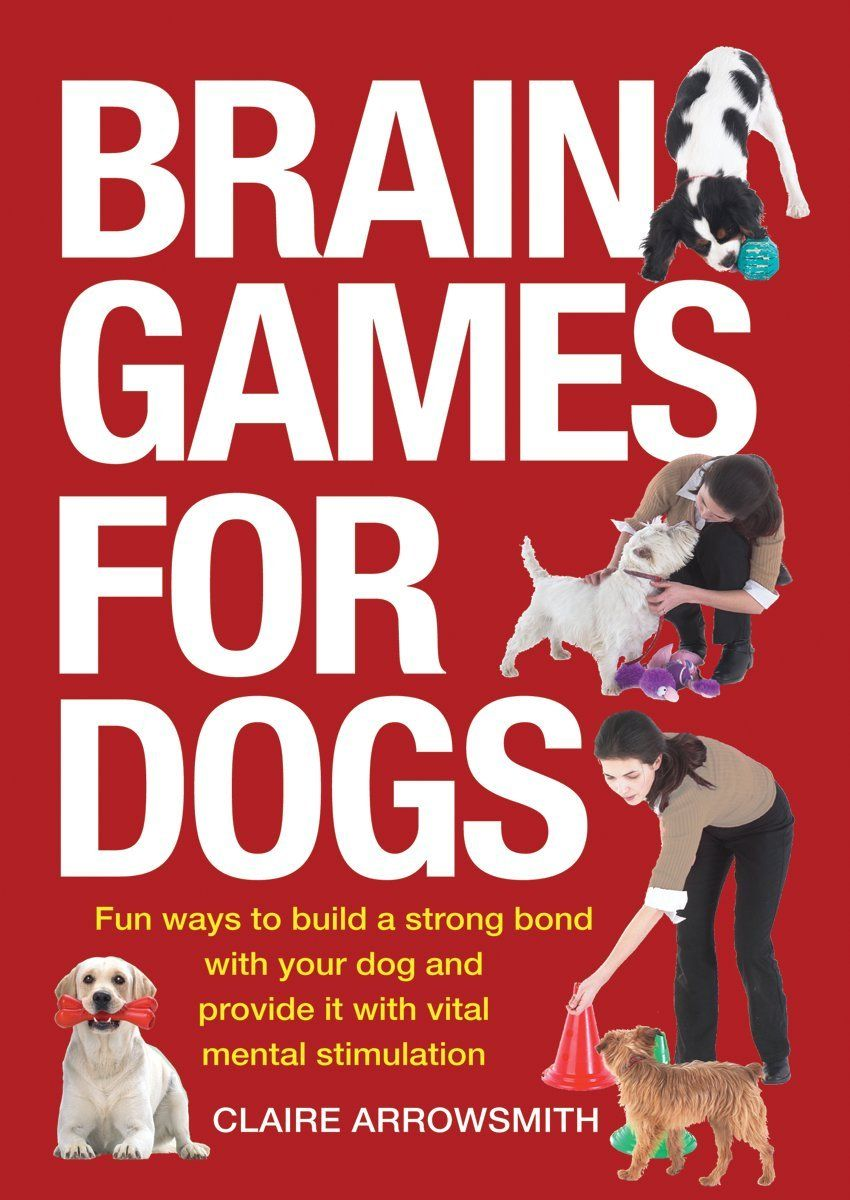 How to calm down a dog top tips for calm dogs brain