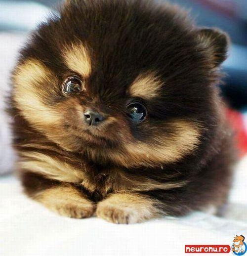 Top10Mostrareanimals  Top 10  Cute Animals 6 -5557