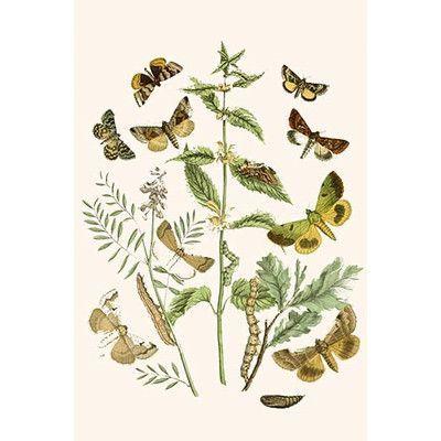 Buyenlarge European Butterflies And Moths Graphic Art Print Wayfair Em 2020 Estampas 5 D Coleções