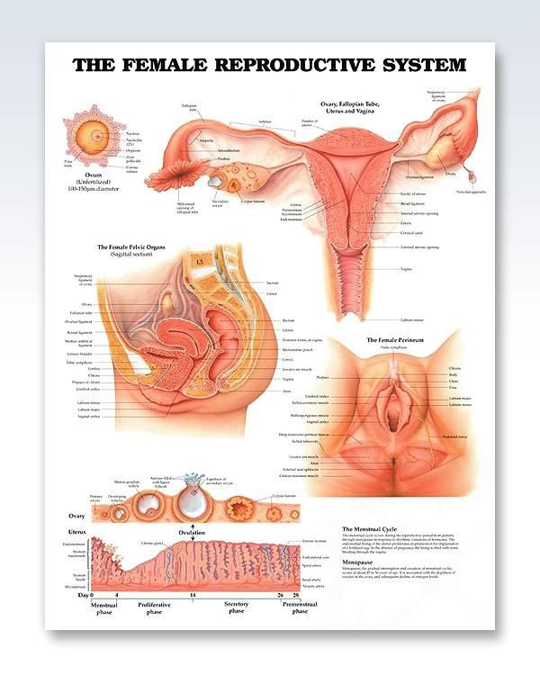 Sexually Transmitted Infections Chart 20x26 Ma Pinterest