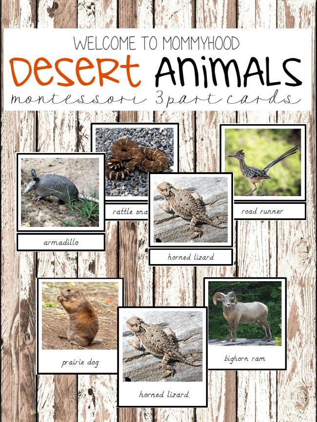 Montessori activities desert animals 3 part cards