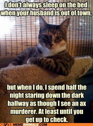 Damn cats