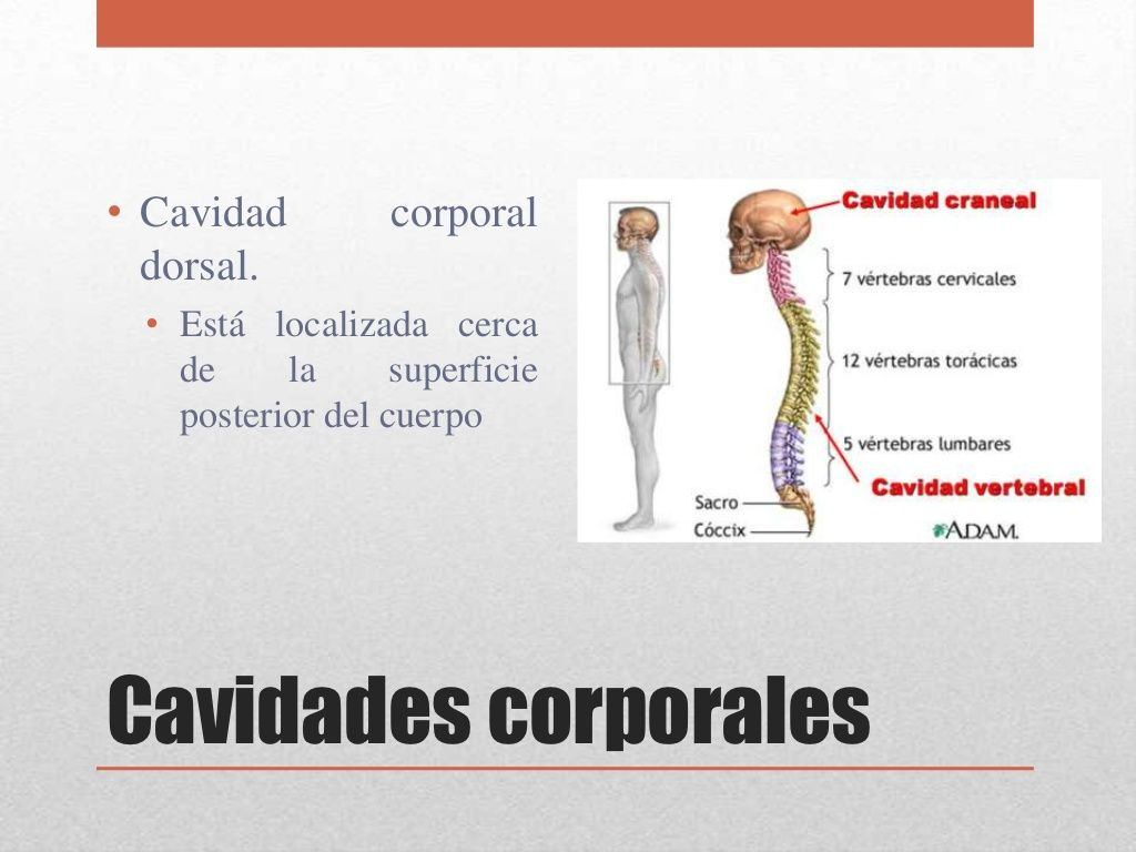 Introducción a la anatomía y fisiología humana | daniel | Pinterest ...