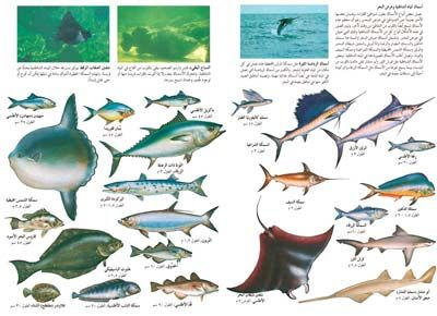 Types Of Fish Fish Vegetables