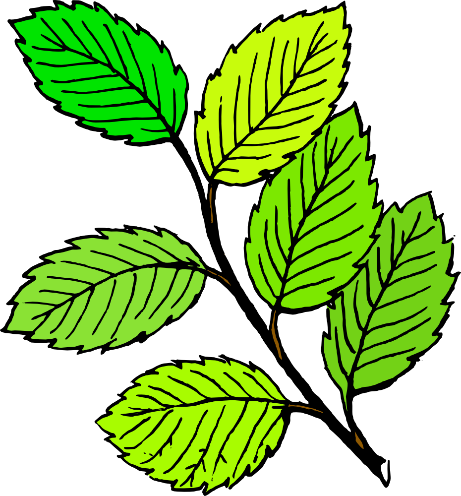 leaves clipart - Google Search   ︵‿✎Clipart   Pinterest   Clipart ...