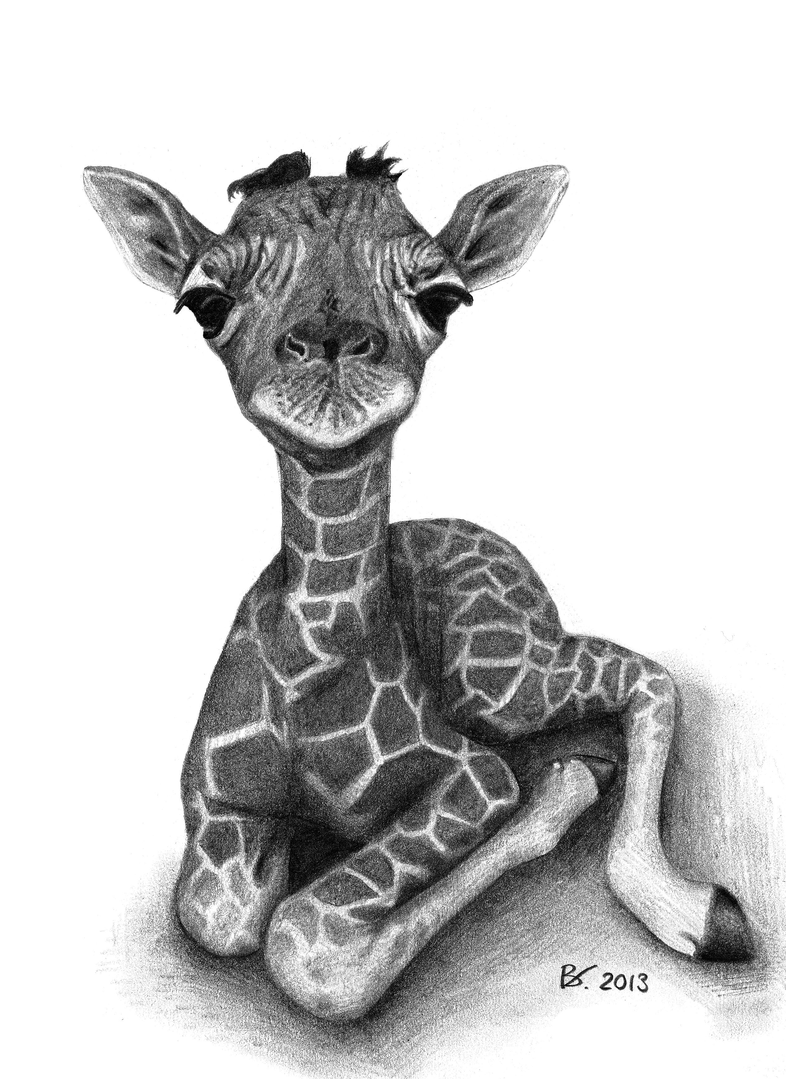 Drawing of a cute baby giraffe. Realism, animal, fine arts