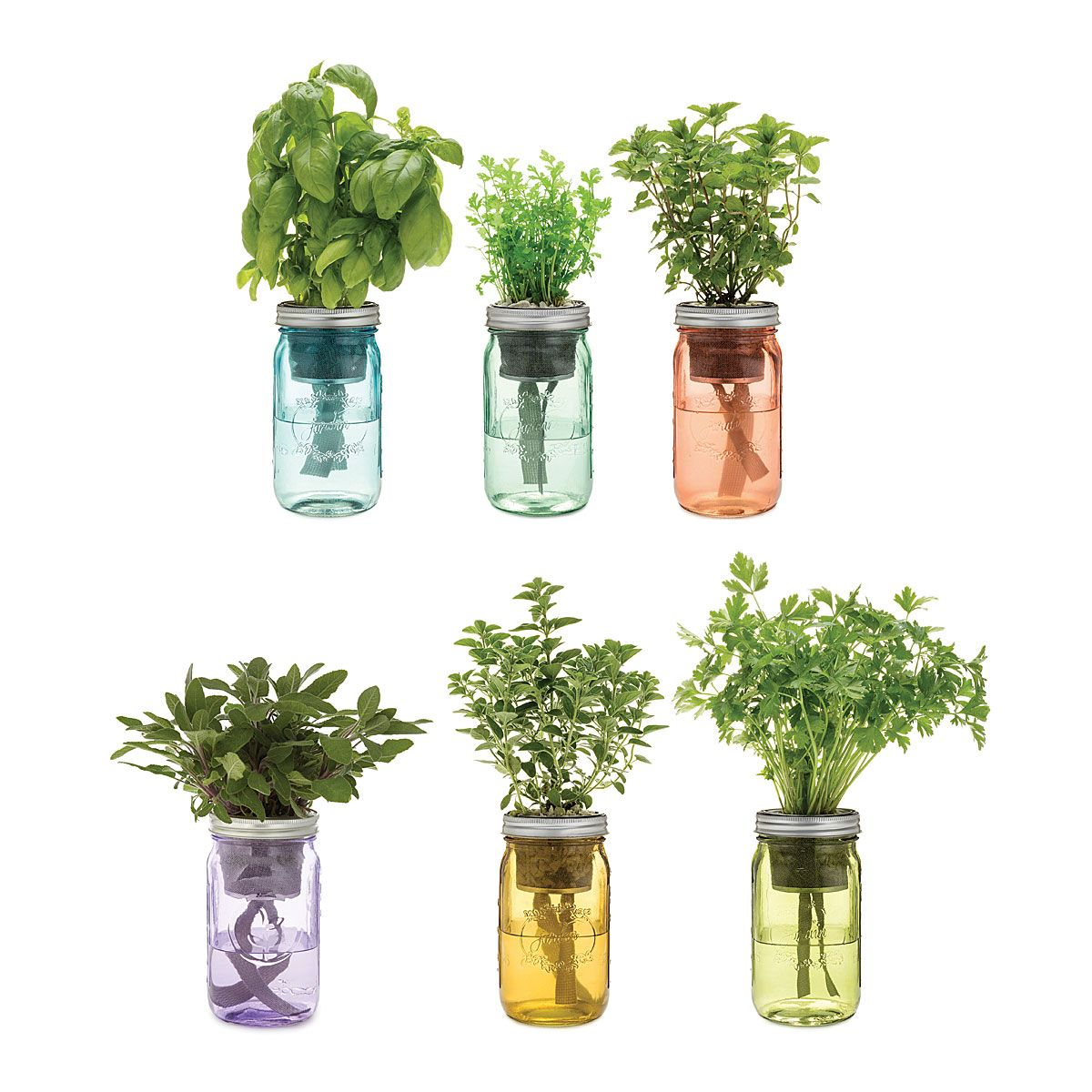 Mason Jar Indoor Herb Garden Hydroponic Grow Kit