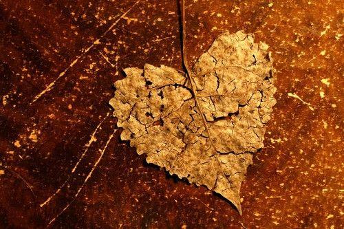 Immagine di love, heart, and autumn