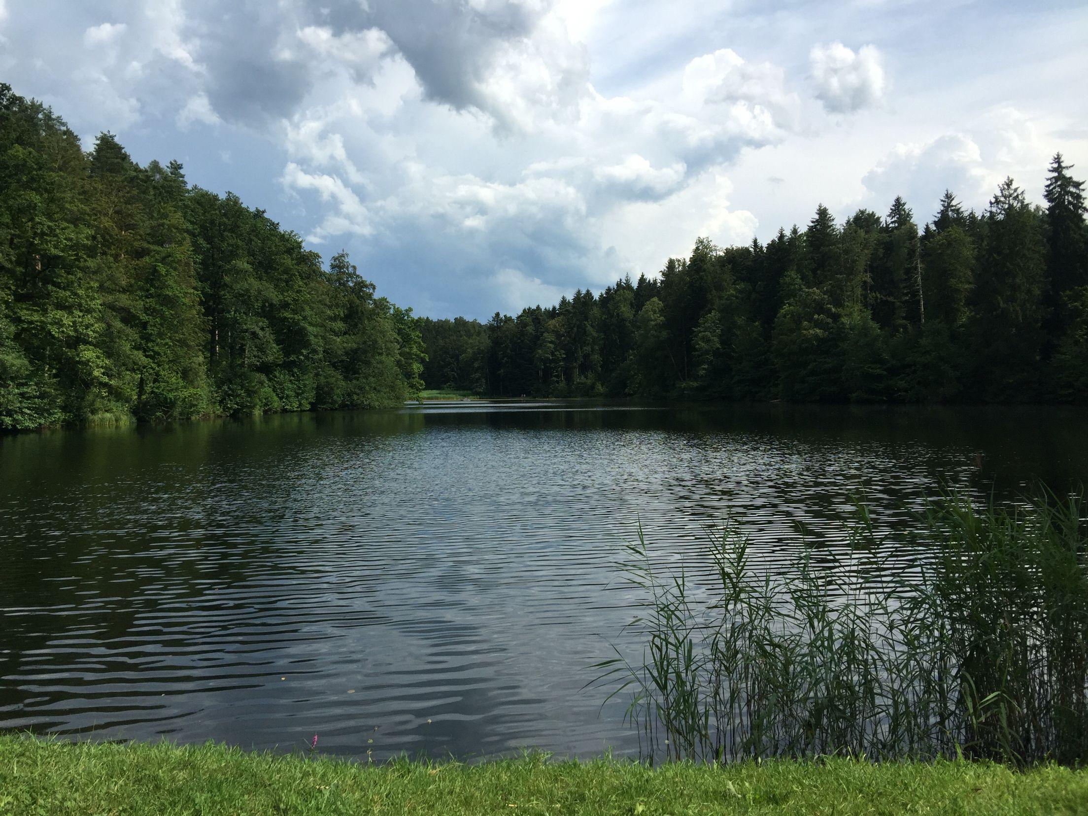Thalwiler Waldweiher
