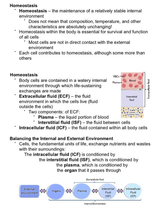 Homeostasis By Definition Important Facts For Physiology
