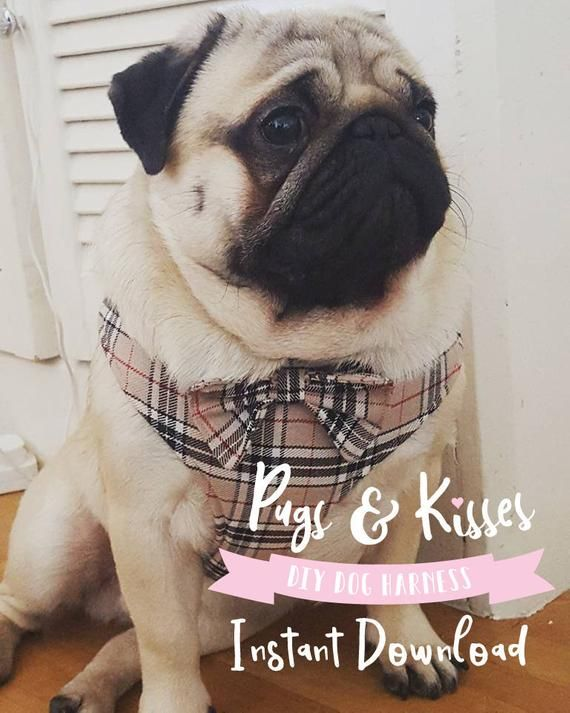 Diy Dog Harness Sewing Pattern And Full Instructions Pdf Download