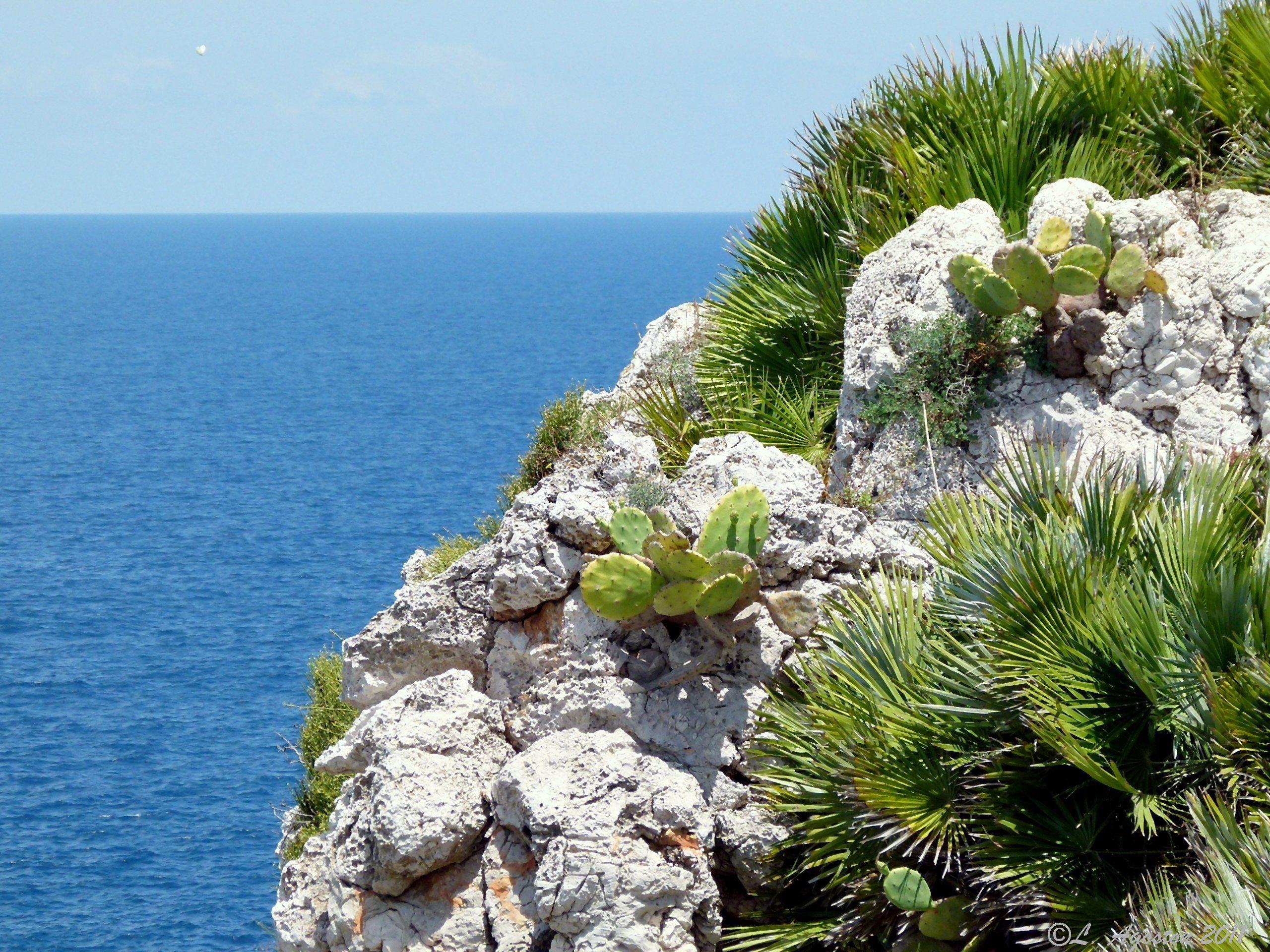 """Sapevi che l'area di Capo Rama è stata oggetto di tutela fin dal 1968 da parte del Comune di Terrasini come """"Biotopo di inestimabile valore""""? www.palmbeachhotel.it #HolidayExperience #InterludeVacation"""