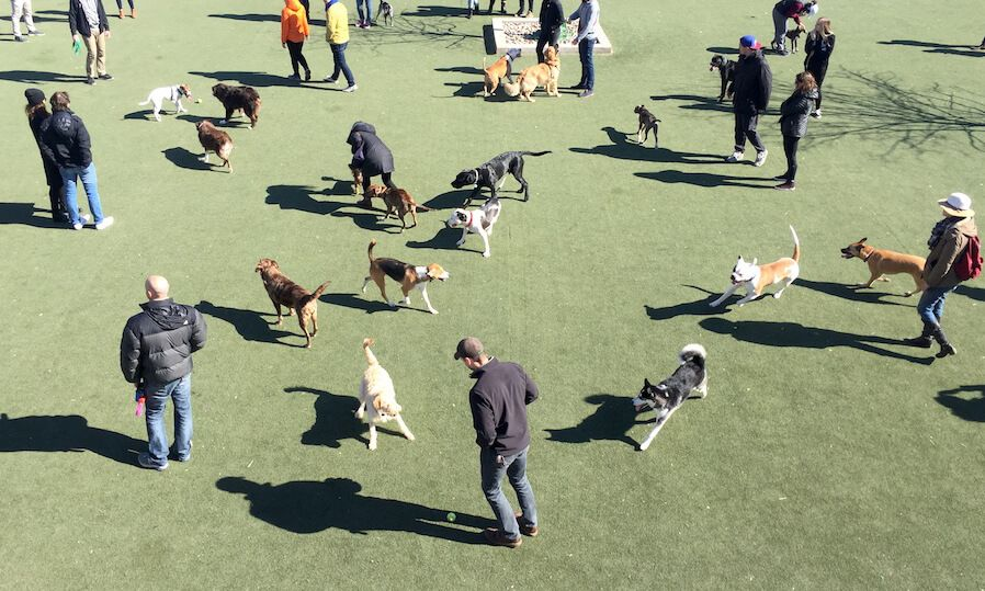 10 Dog Friendly Things to Do in Philadelphia Dog friends