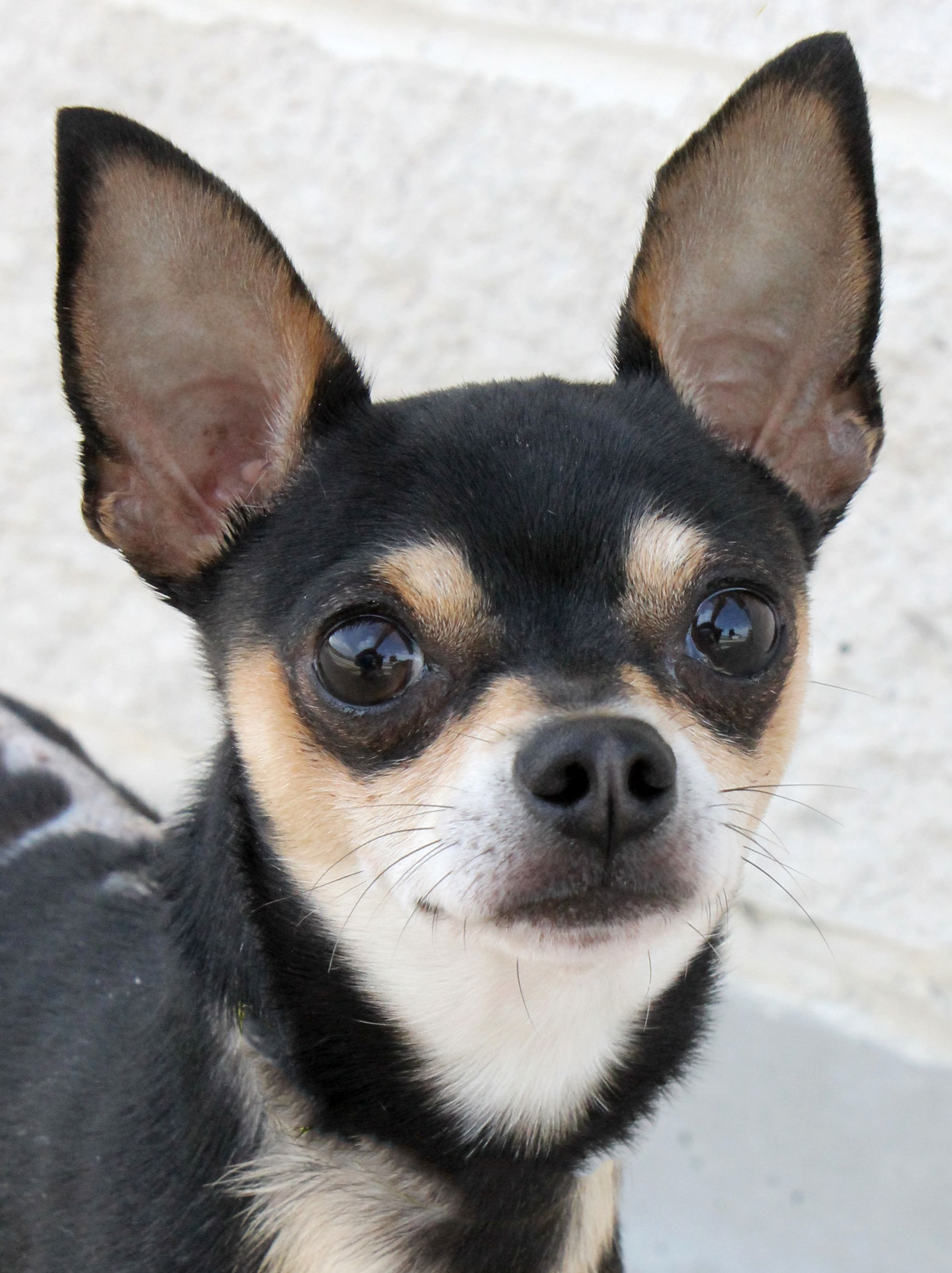 Frankie See More Dogs Cats On Www Sahumane Org Follow Us On