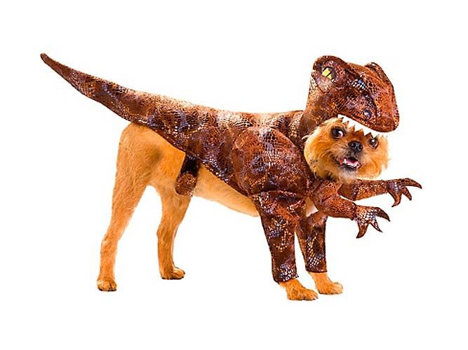 Yo Dawg I Heard You Like Animals So We Put Pet Costumes Dog