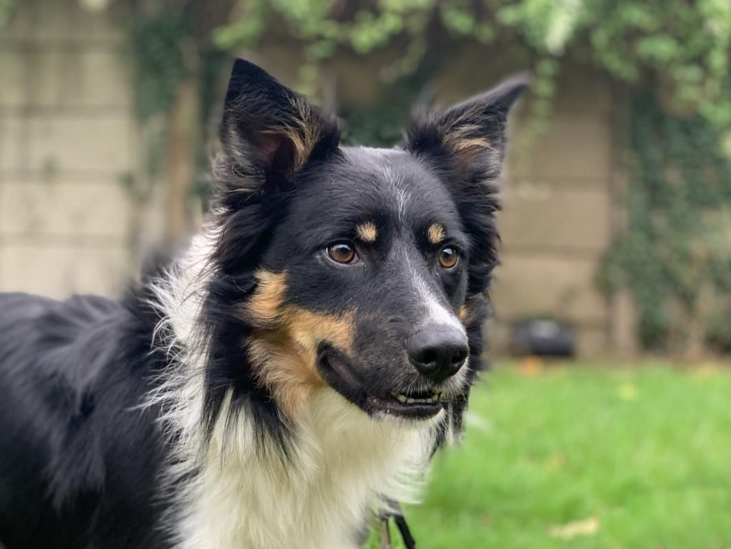 Looking at Ed dogstrust rehomeadog (With images