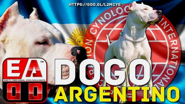 Pin By Dog Lover On Dogo Argentino Store Convenience Store Packing