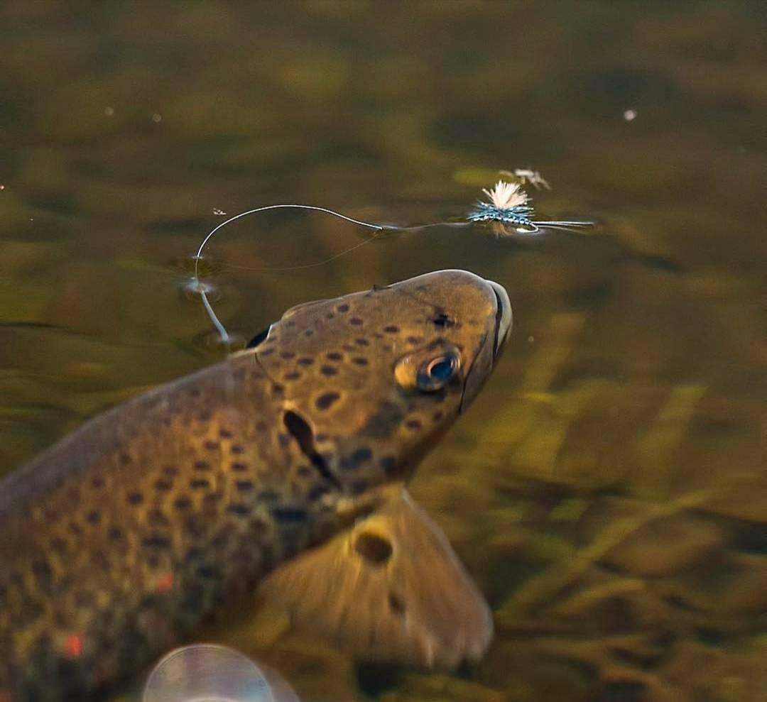 "1,371 Likes, 14 Comments - Fishing Fantasy (@fishing_fantasy) on Instagram: ""Eat it! Dope shot by @finripplemedia via @flylords #fishing #bass #bassfishing #largemouth…"""