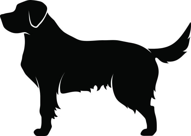 Pin By Becky Thompson On Grrand Golden Retriever Rescue Adoption Of Needy Dogs Golden Retriever Silhouette Golden Retriever Outline Golden Retriever Rescue Adoption