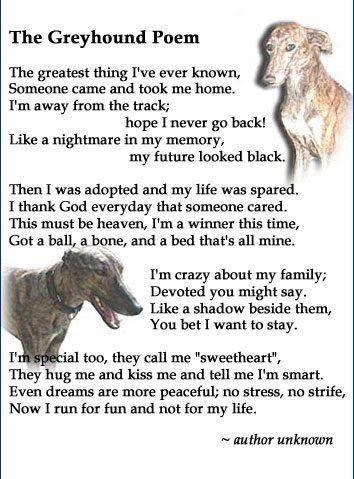 133 Facebook Greyhound Grey Hound Dog Greyhound Adoption