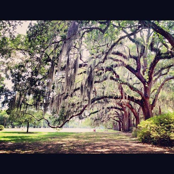 I mean these treesso beautiful! #Savannah