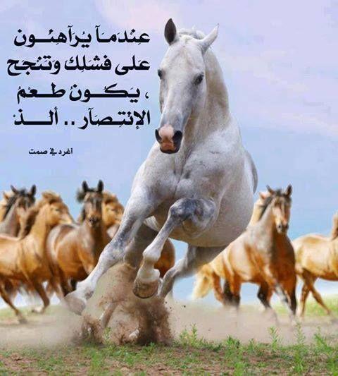صور أجمــل عبارات أغرد فــي الصــــمت Beautiful Horses Pretty Horses Horses