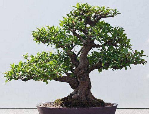 20 Enchanting Miniature Bonsai Decoration Ideas | fluers