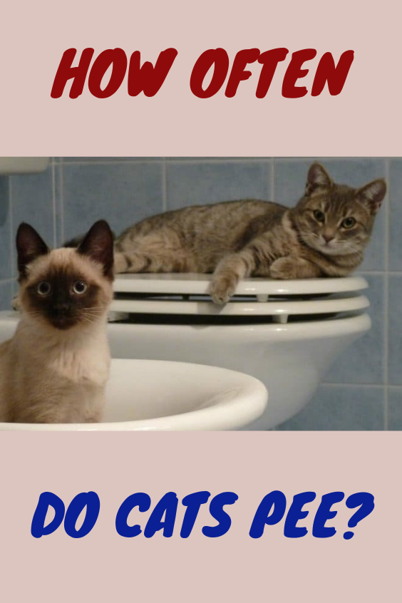 Bathroom Breaks And Bothersome Bladders How Often Do Cats Pee Com Imagens